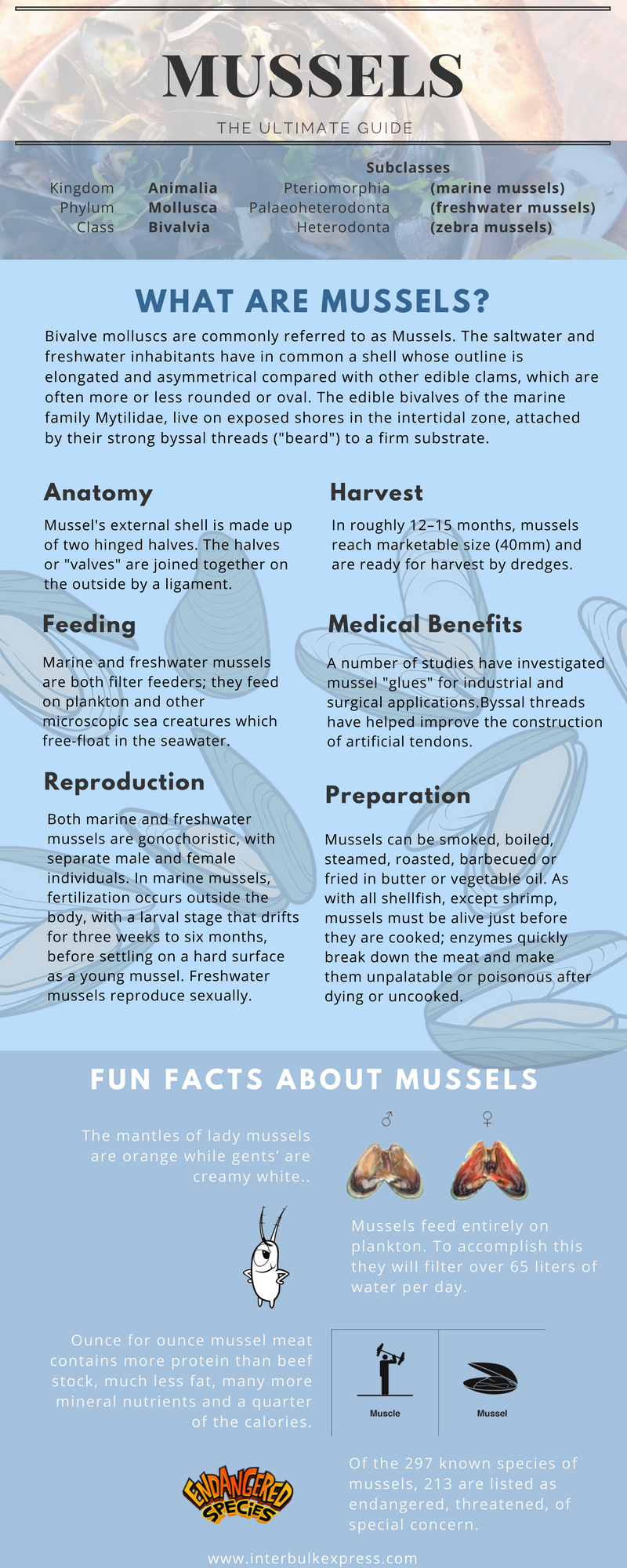 facts about mussels