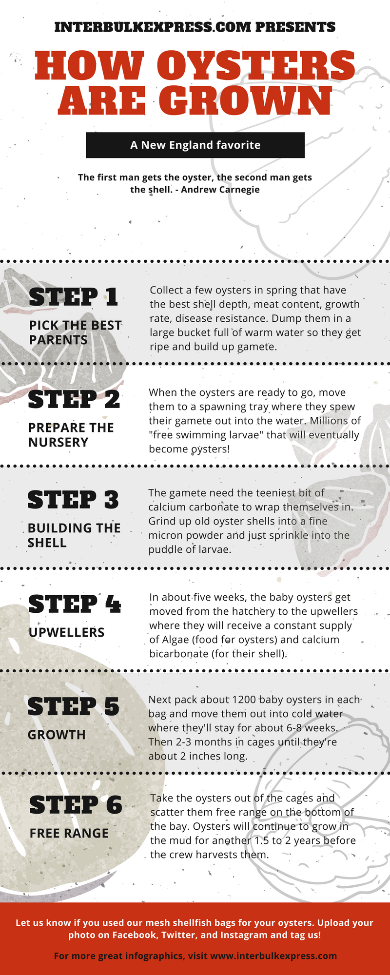How Oysters Grow Infographic